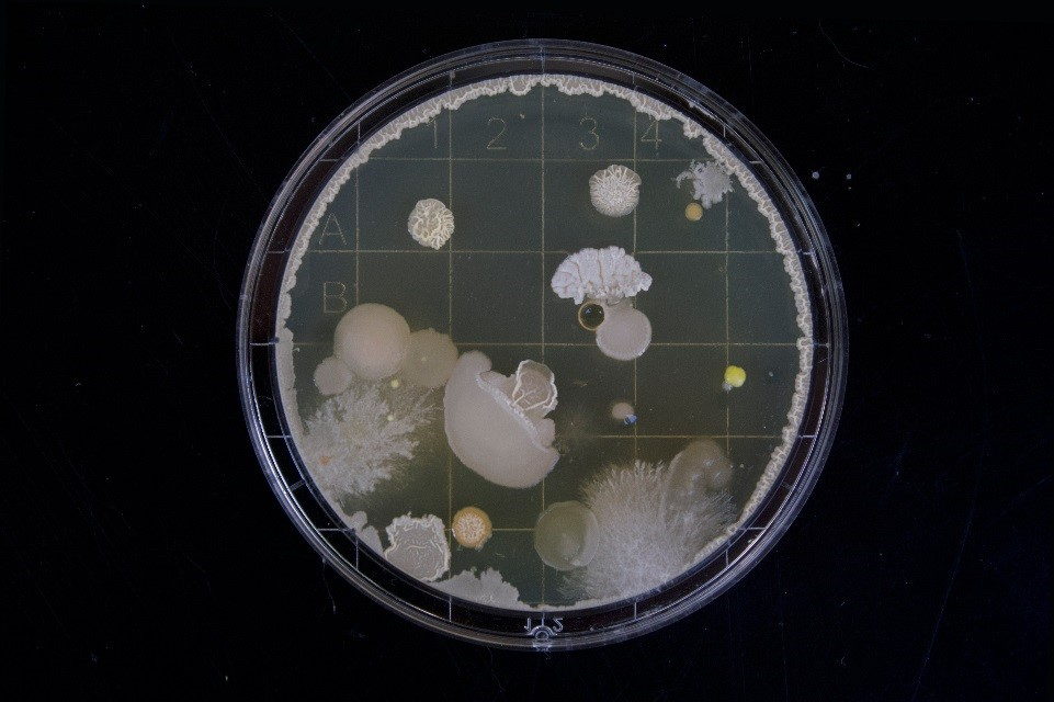 Petri Dish on black background